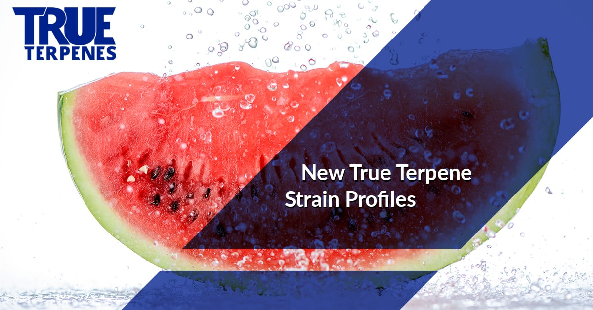 Terpenes For Sale - NewTerpene Strain Profiles: Mimosa